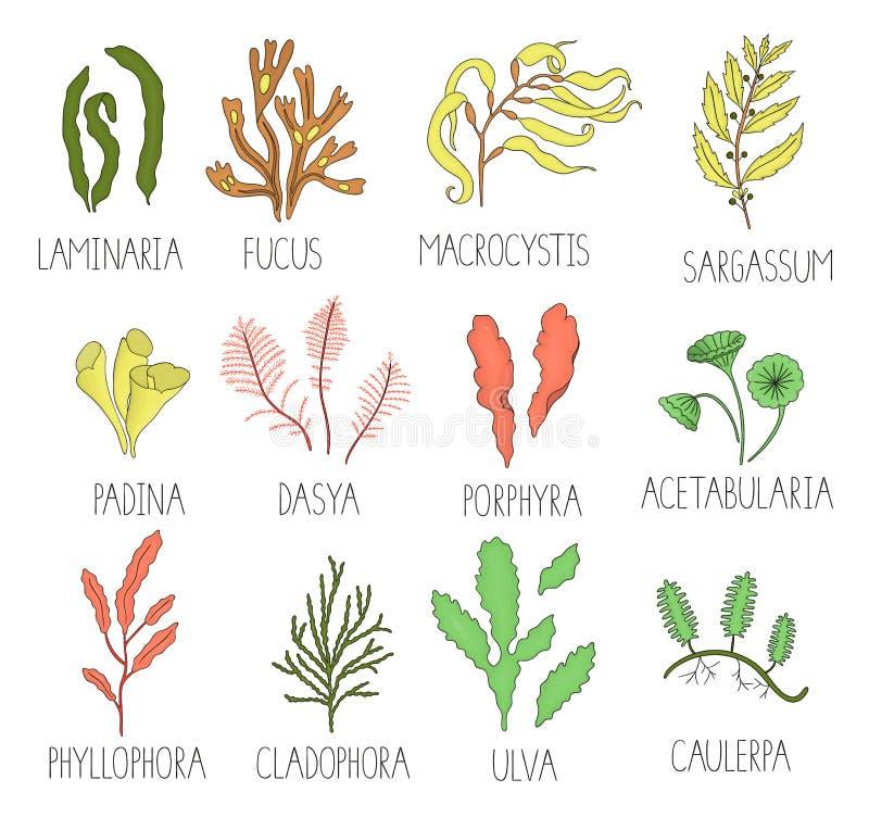 Kulör uppsättning för vektor av havsväxter stock illustrationer