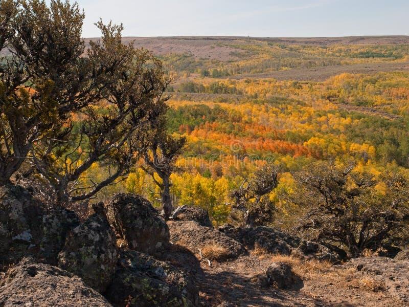 Kulöra asp- trees för höst i öken royaltyfri foto