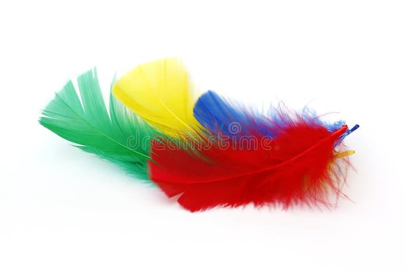 Kulöra fjädrar royaltyfri bild