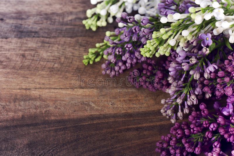 Kulöra lilor royaltyfri bild