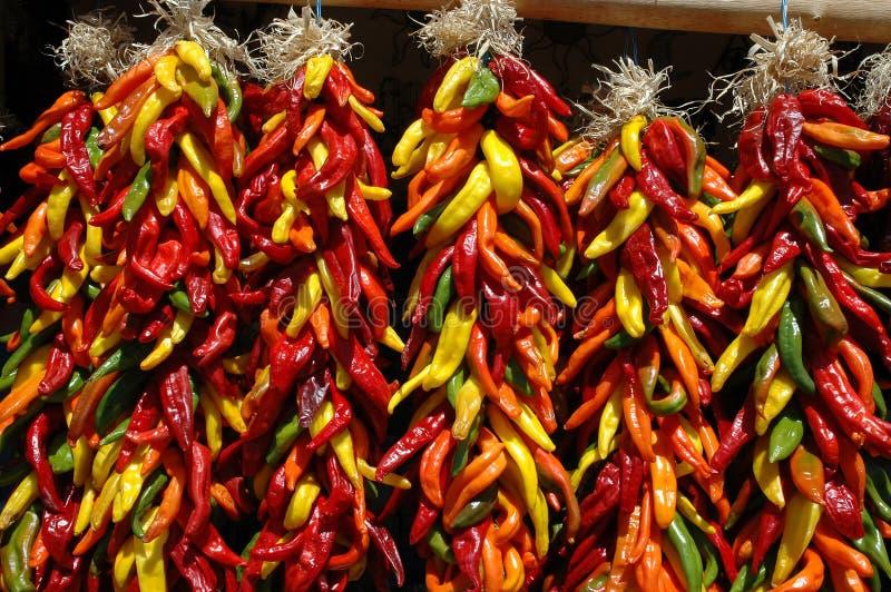 kulöra mång- ristras för chili royaltyfri bild
