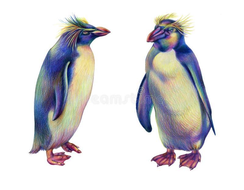 Kulöra pingvin för rockhopper för regnbåge för blyertspennateckning vektor illustrationer