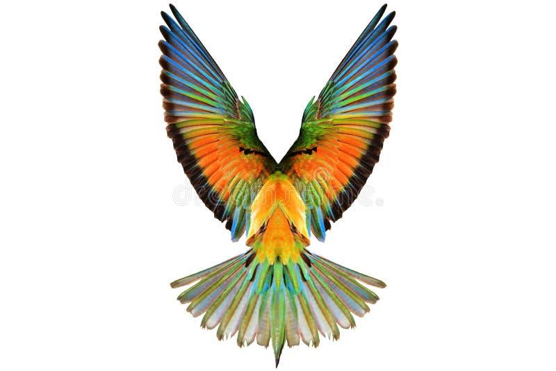 Kulöra vingar på en vit bakgrund royaltyfri bild