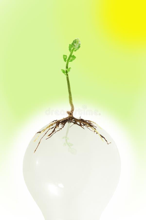 kula som växer ljust växtbarn royaltyfri bild