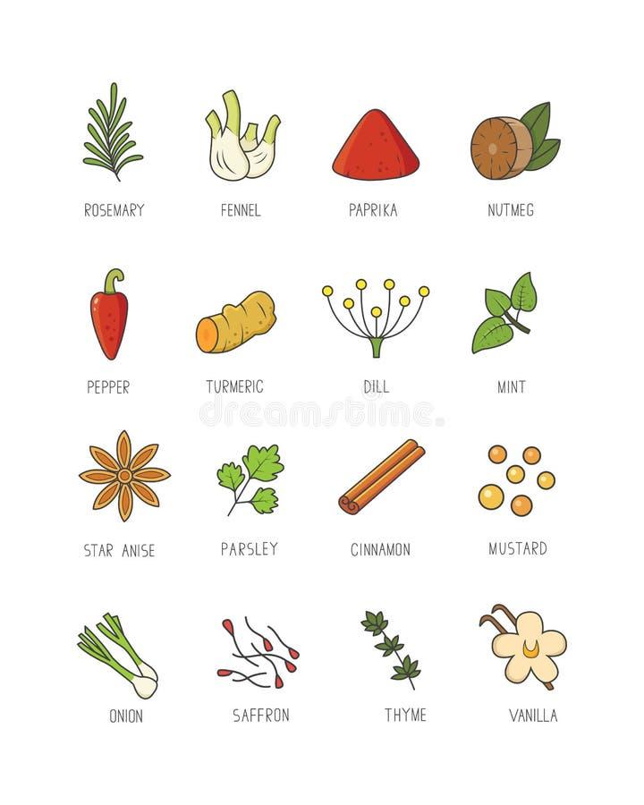 Kulinarische Gewürze und Kraut für Ihr Menü oder Küchenentwurf Würzsammlung in der linearen Art lizenzfreie abbildung