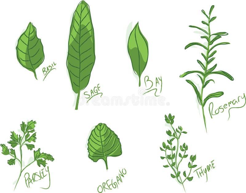 kulinariska örtar stock illustrationer