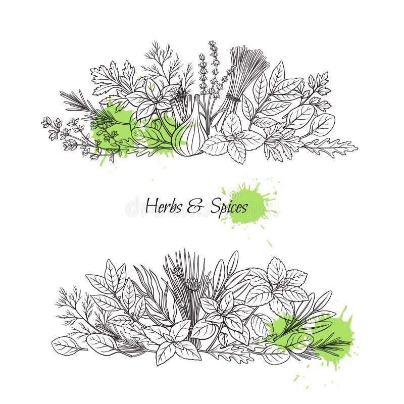Kulinariska örter och krydda stock illustrationer