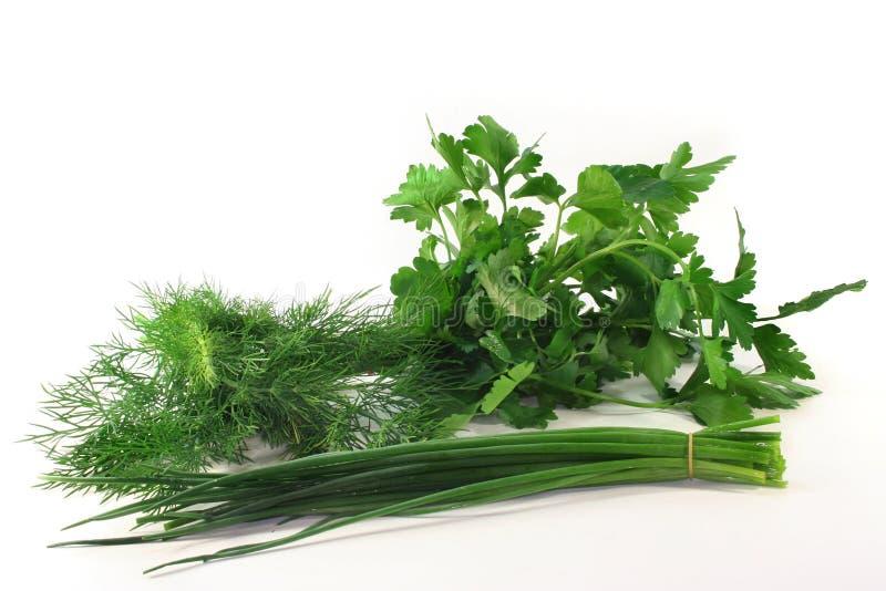kulinarni ziele zdjęcia stock