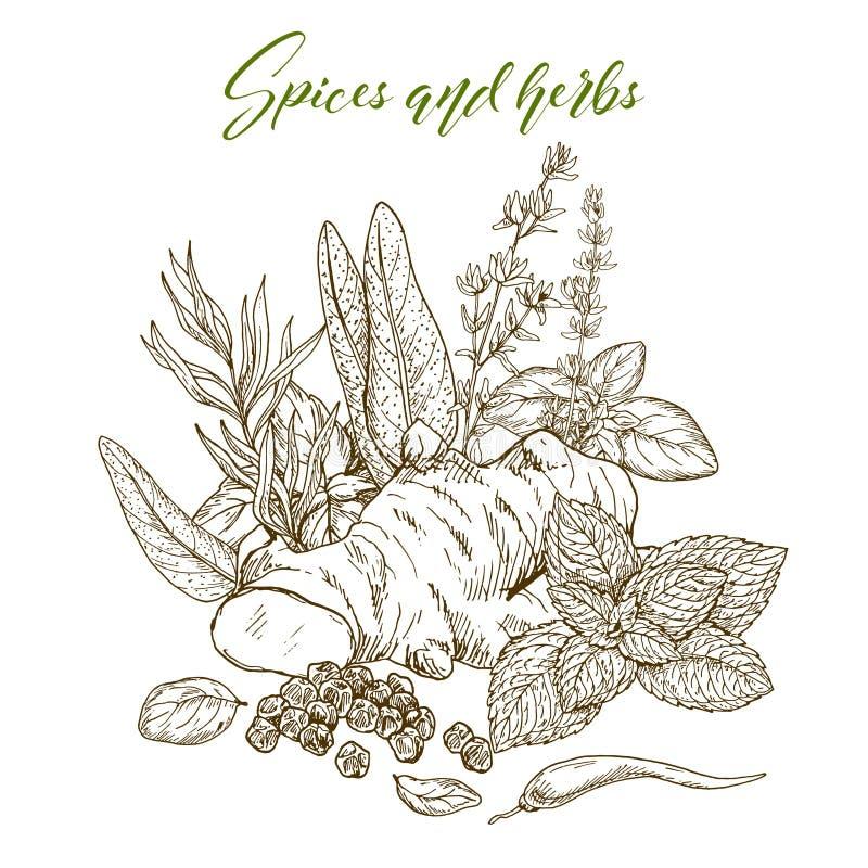 Kulinarni ziele i pikantność ilustracja wektor