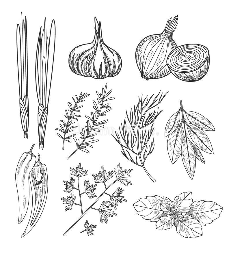 Kulinarni ziele i pikantność ptaka rocznik śliczny ilustracyjny ustalony ilustracja wektor