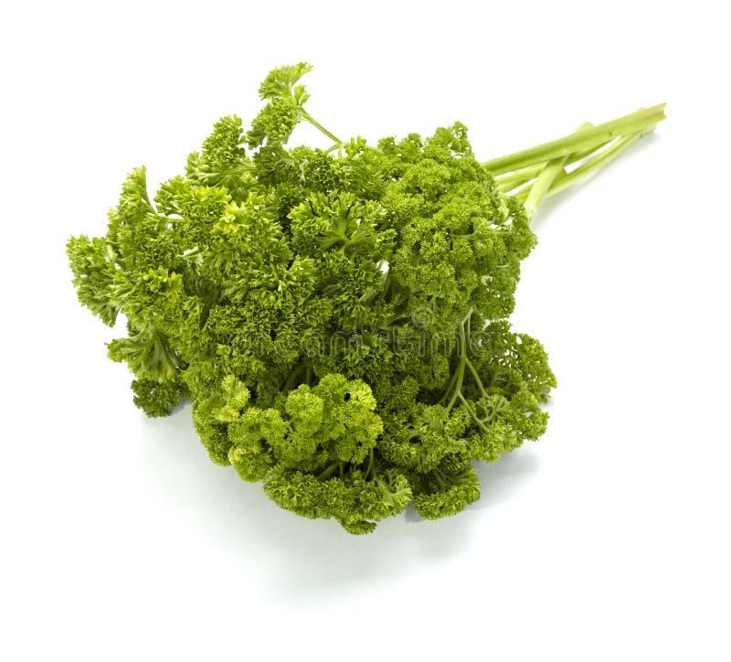 kulinarny karmowy pietruszki sałatkowego warzywa jarosz zdjęcia royalty free