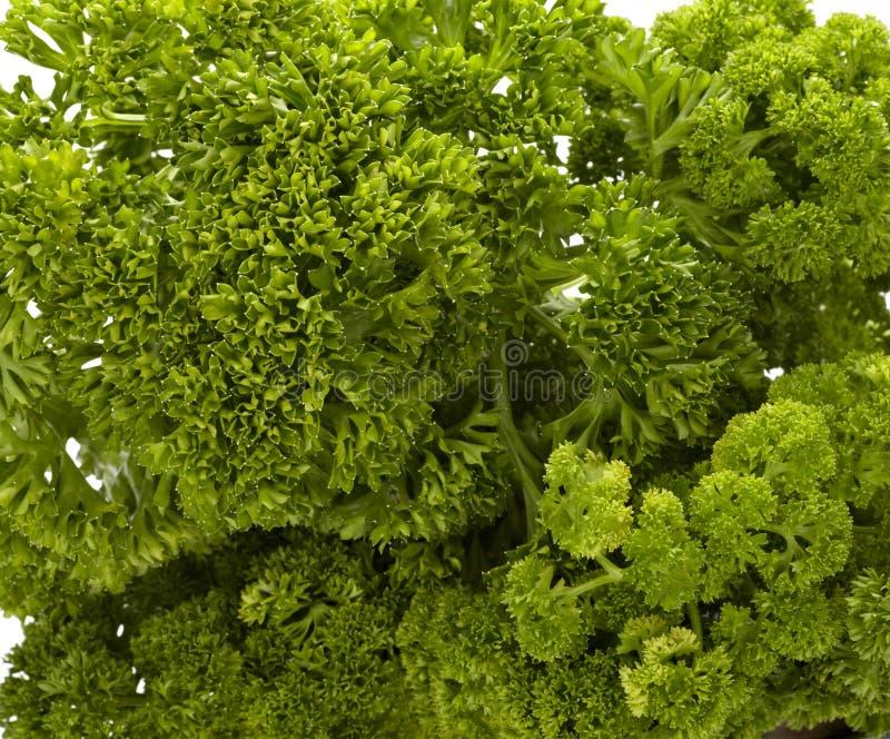 kulinarny karmowy pietruszki sałatkowego warzywa jarosz zdjęcie stock