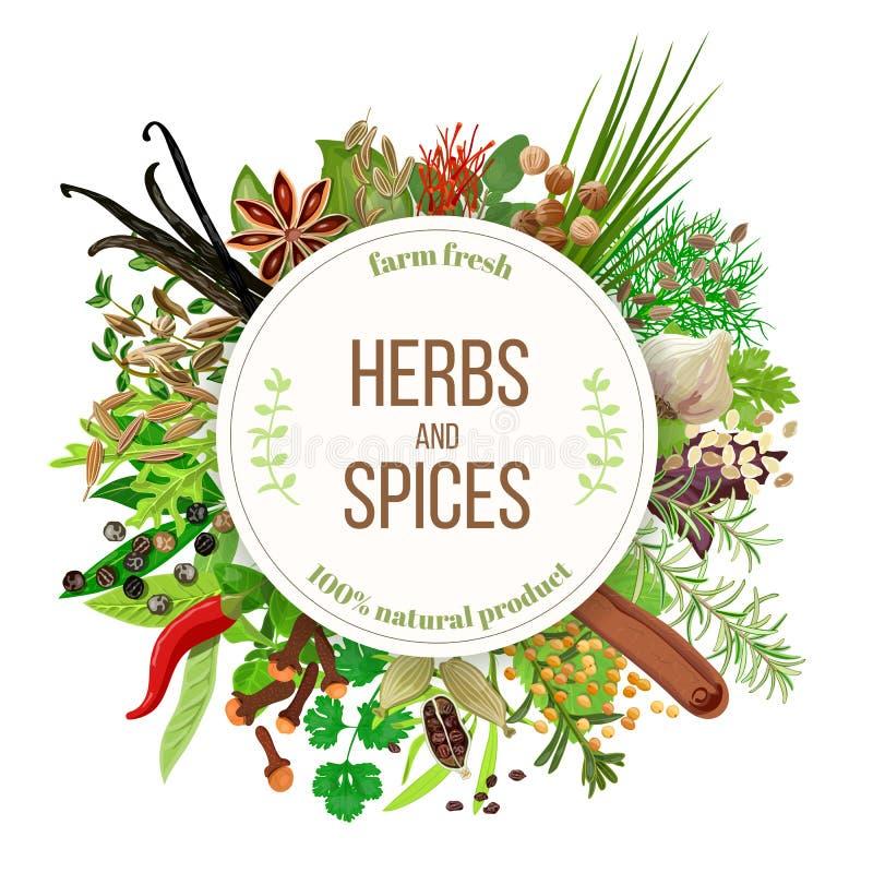 Kulinarny ziele i pikantność duży set ilustracja wektor