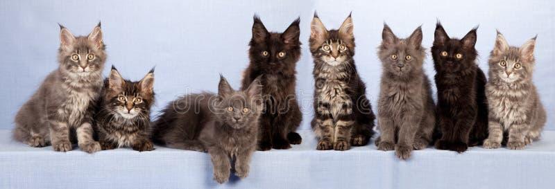 Kull av gulliga kattungar royaltyfri fotografi
