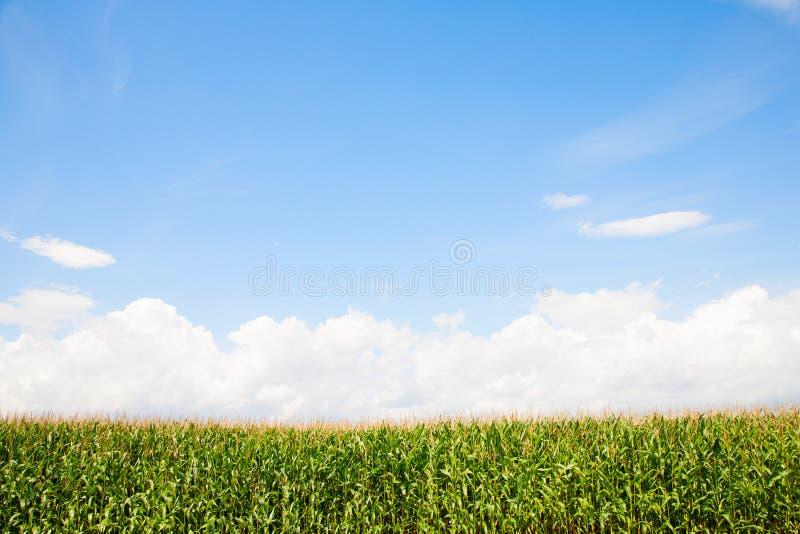 kull för fält för bakgrundshavreafton royaltyfria foton