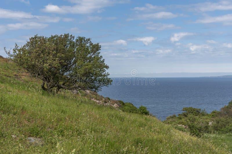 Kullabergnatuurreservaat in Zweden royalty-vrije stock afbeelding