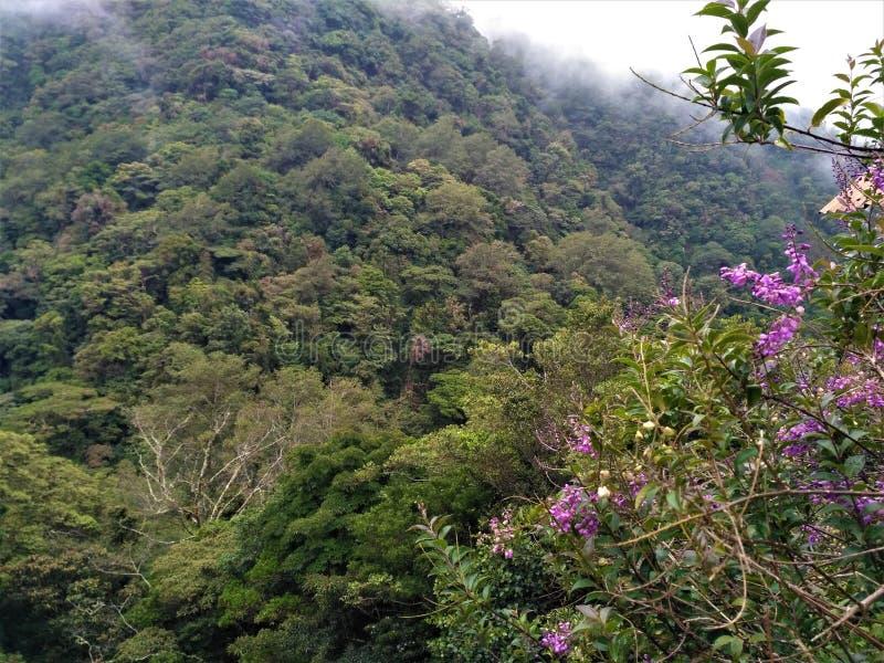 Kullar av Juan Castro Blanco National Park och blommor royaltyfri bild