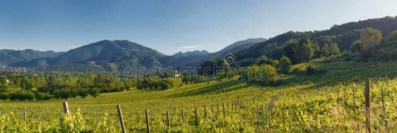 Kullar och wineyards fotografering för bildbyråer