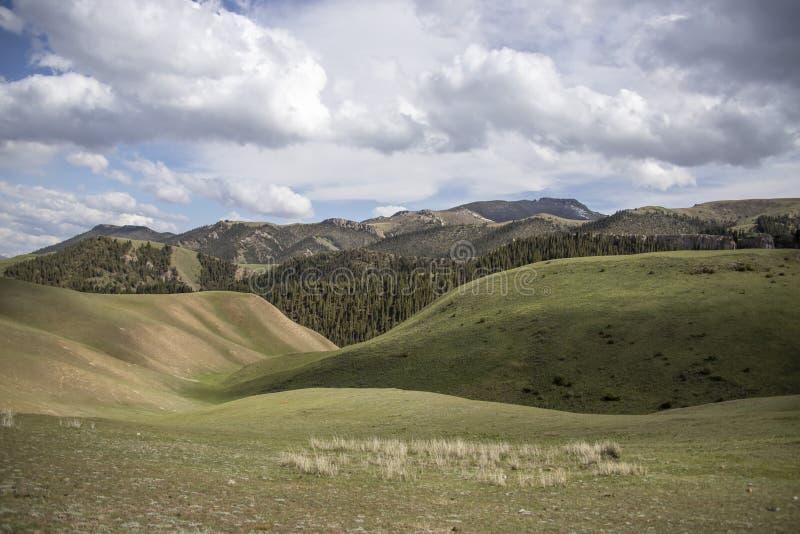 Kullar som täckas med grönt gräs och barrskogen mot en molnig himmel Resor kyrgyzstan royaltyfri foto