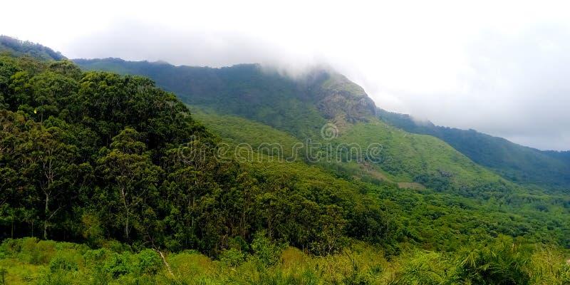 Kulleöverkantskog i Ooty, Indien södra Indien, gröna kullar arkivbild