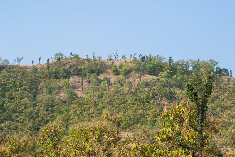 Kulle och skogen nära Indore royaltyfri bild