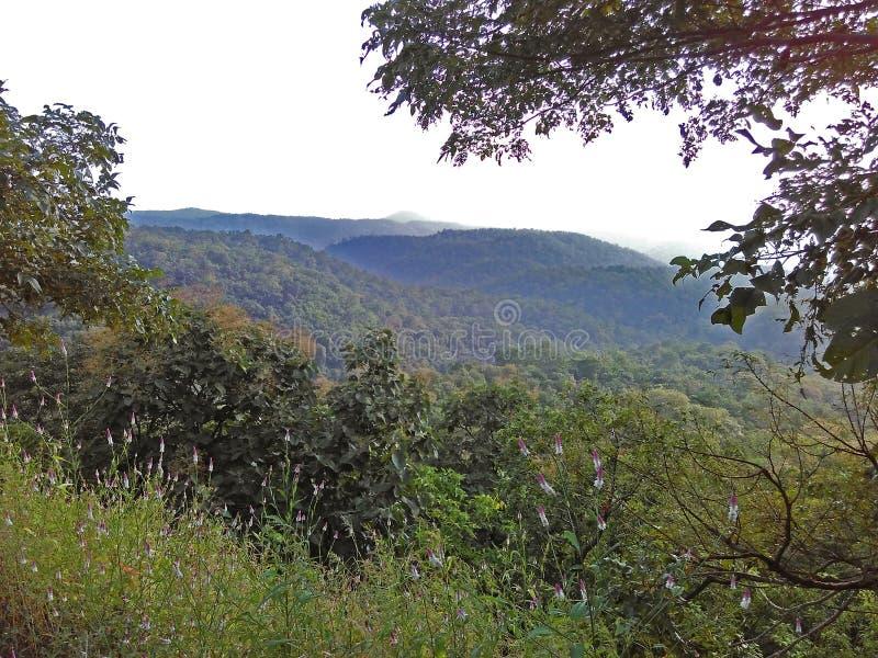 Kulleberg Forest Landscape i Indien arkivbild