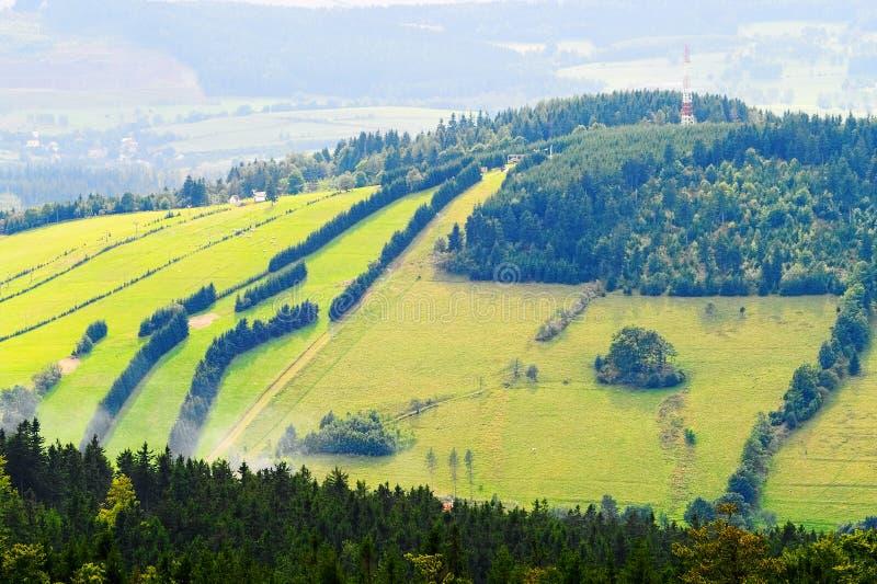 Kullelutning som täckas med grönt gräs och prydliga träd i Owl Mountains, Sudetes, Polen royaltyfria foton