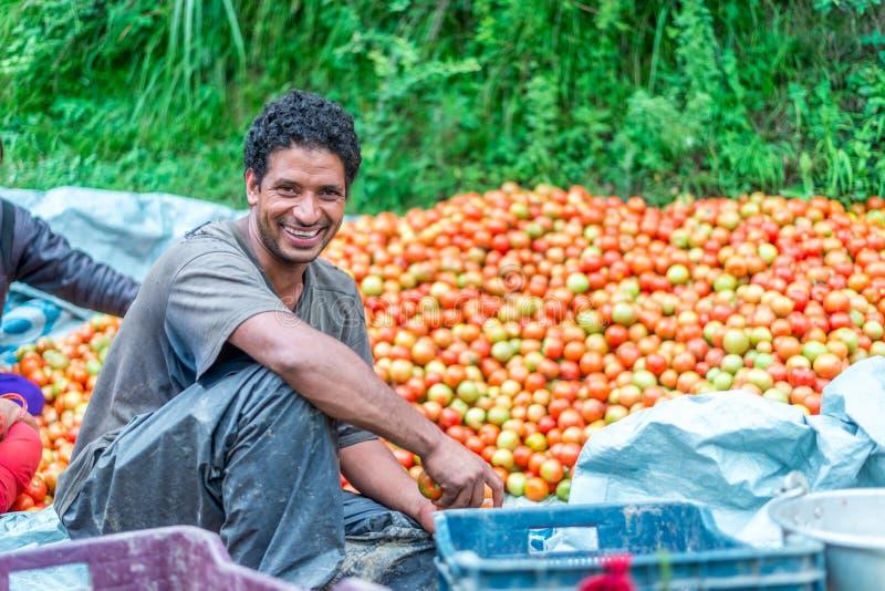 Kullu, Himachal Pradesh India, Sierpień, - 06, 2018: Mężczyzna sprzedaje świeżego lokalnego pomidoru w sainj - Pomidorowy sprzeda obraz stock