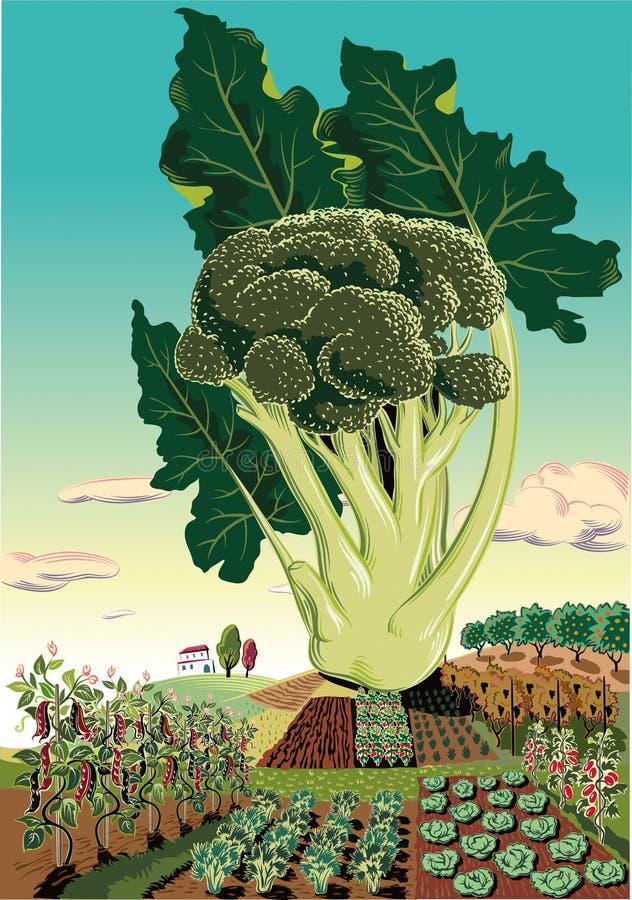 Kultiverat jordbruks- landskap, med broccoli vektor illustrationer