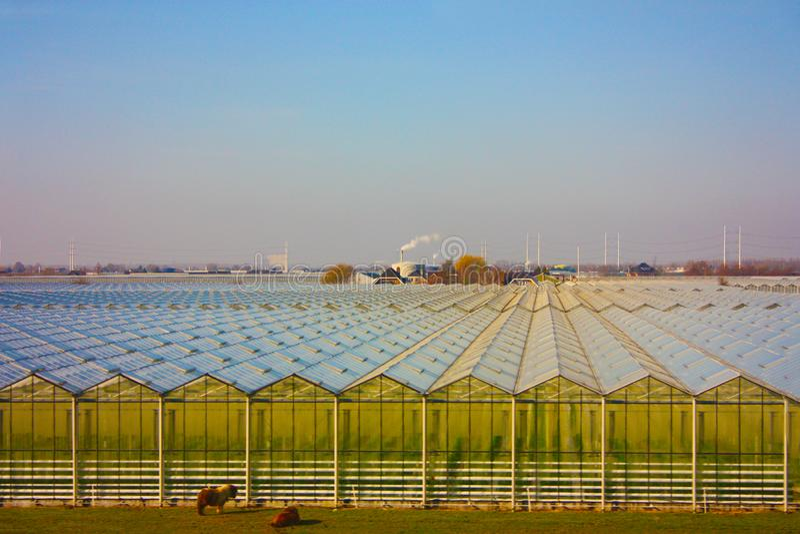 Kultiverat sätta in land som används för jordbruksproduktion i ordnade geometriska växthus i många rader arkivbilder