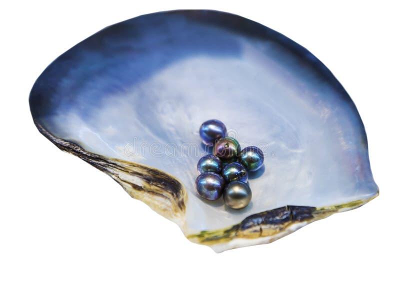 Kultivierte Perlen innerhalb Austern-Shell-Perlmutt stockbild