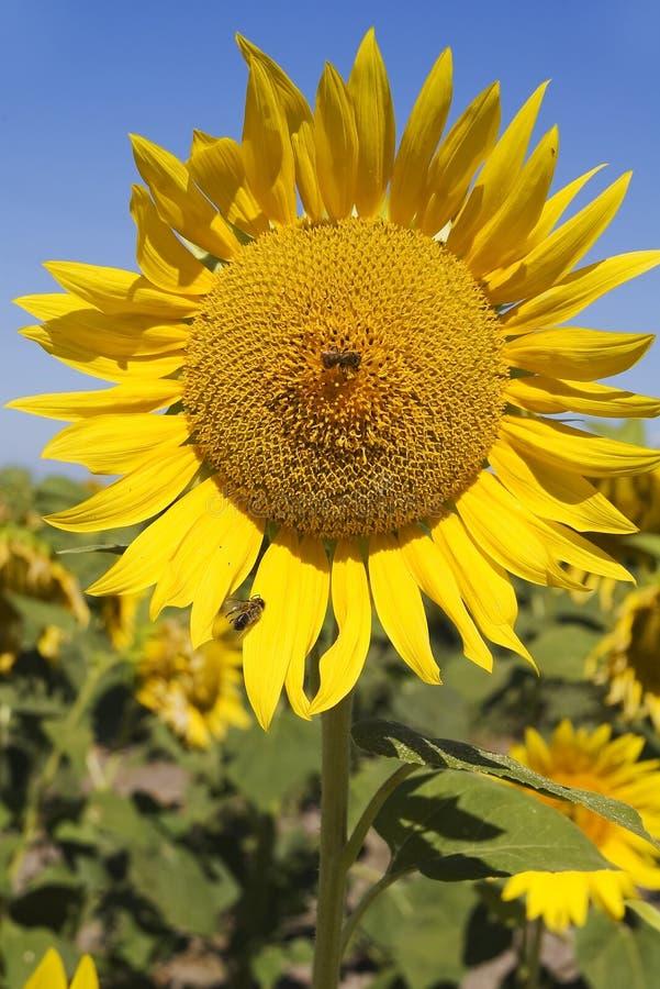 Kultivierung stockfotos