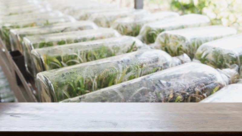 kultur för växtsilkespapper som växer i en flaska på hylla i rum & x28; suddighet arkivfoton
