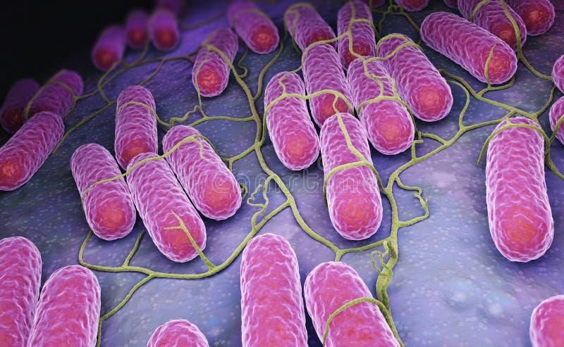Kultura Salmonella bakterie royalty ilustracja