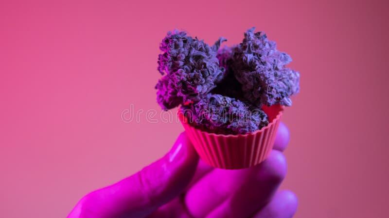 kultywacja marihuana w szczegółach Legalizuje w usa zdjęcia royalty free