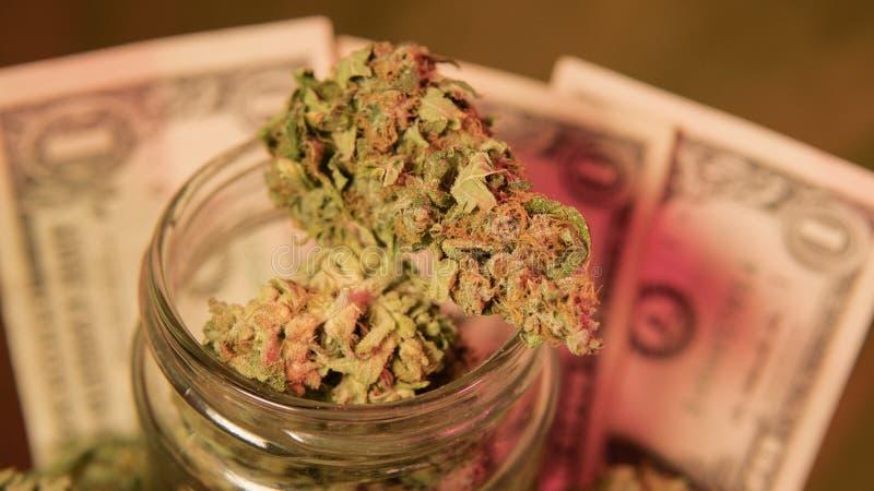 kultywacja marihuana w szczegółach Legalizuje w usa zdjęcie stock