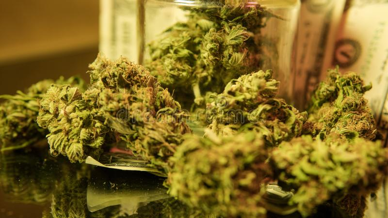 kultywacja marihuana w szczegółach Legalizuje w usa fotografia stock