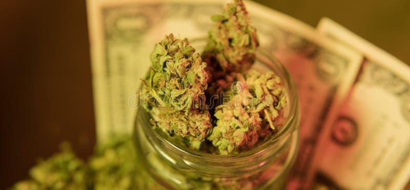 kultywacja marihuana w szczegółach Legalizuje w usa obrazy royalty free