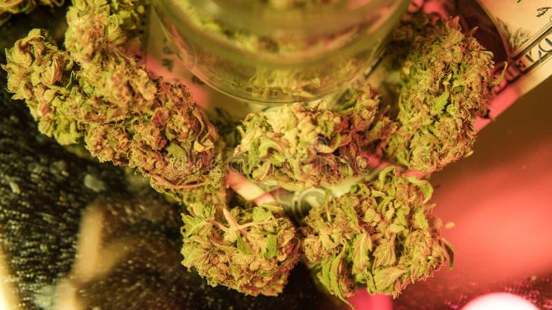 kultywacja marihuana w szczegółach Legalizuje w usa obraz stock