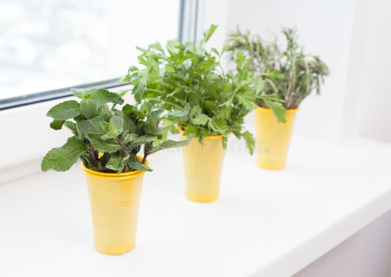 Kultywacja rośliny na windowsill fotografia royalty free