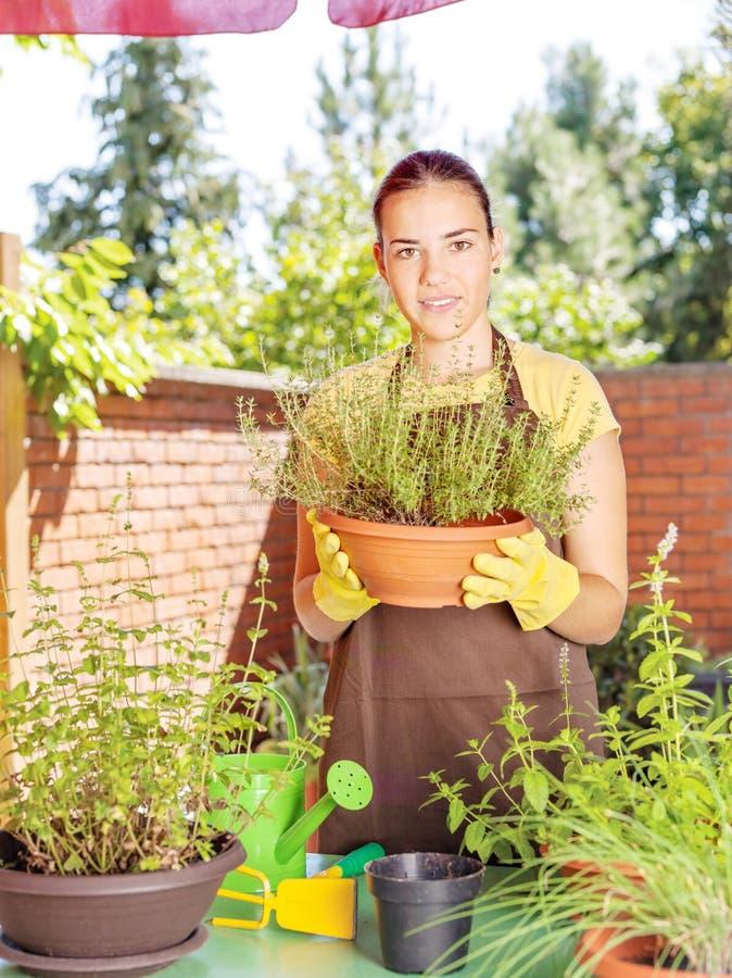 Kultywacja rośliny w garnkach zdjęcie stock