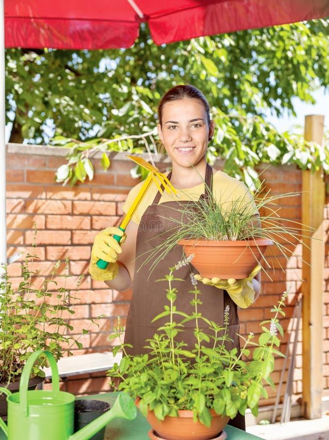 Kultywacja rośliny w garnkach obraz royalty free