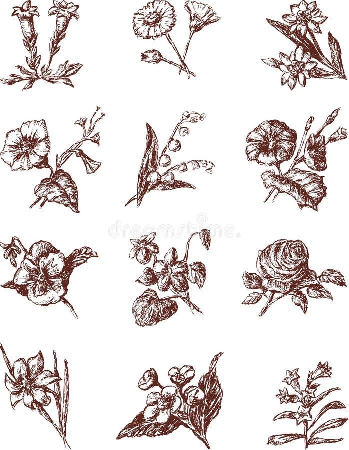 Kultywujący kwiaty ilustracja wektor