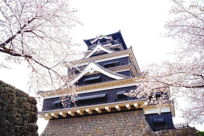 Kumamoto kasztel Kumamoto z Czereśniowym okwitnięciem od Kumamoto, Japonia obraz stock