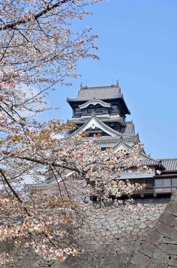 Kumamoto kasztel z Sakura fotografia royalty free