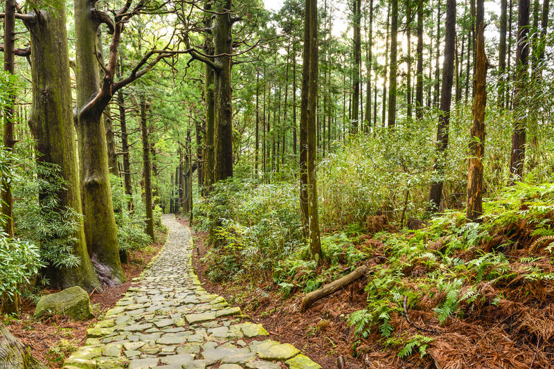 Kumano Kodo神圣的日本人足迹 免版税库存图片