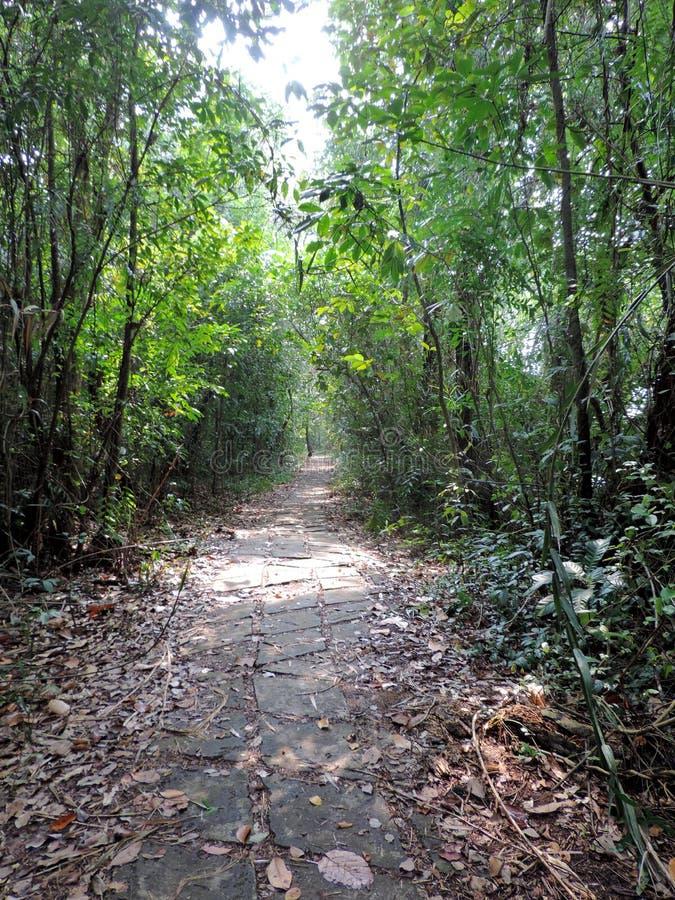 Kumarakom Bird Sanctuary in Kerala, India. Narrow walkway inside the Kumarakom Bird Sanctuary in Kerala, India. Kumarakom Bird Sanctuary also known as Vembanad stock photo