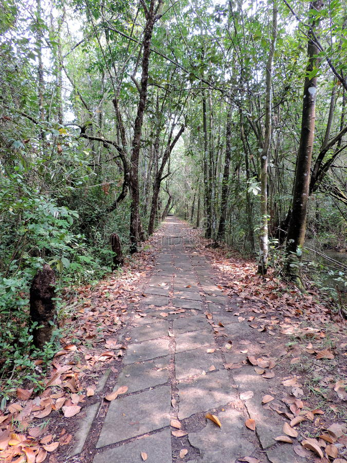 KumarakomVogelreservaat in Kerala, India stock foto