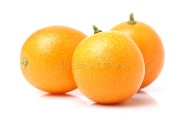 kumquat imagens de stock royalty free
