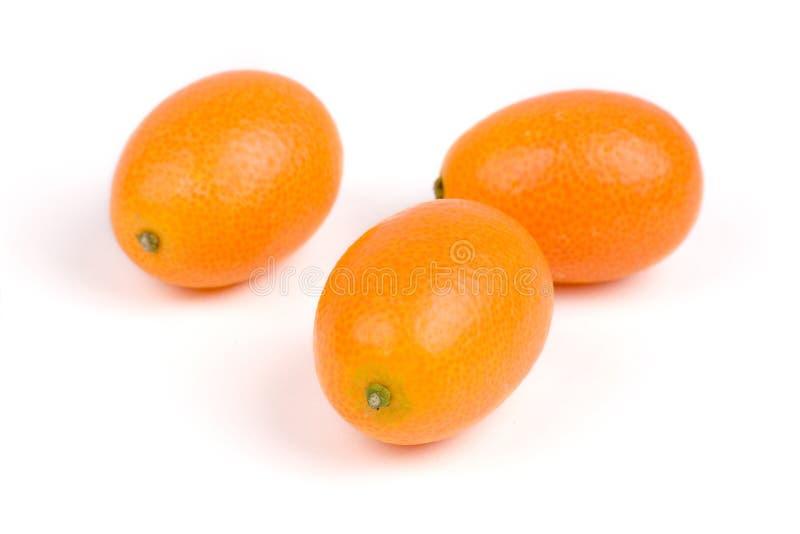 Kumquat royalty free stock images